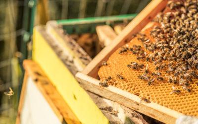 La cera d'api nella medicina